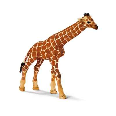 Video schleich-14321-Figurine bebe Girafe